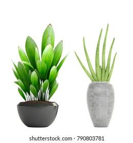 3d illustration of tropical plants in pots of concrete
