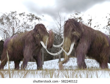 A 3-D illustration of two cloned Woolly Mammoths grazing in a snow-covered grassy field in a hypothetical scenario.