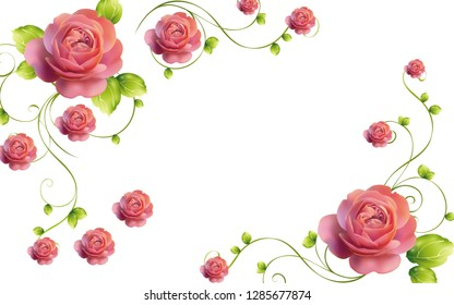 3d illustration, white background, beautiful large pink roses on a climbing branch