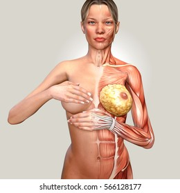 3d illustration of a woman anatomy controlling her breast