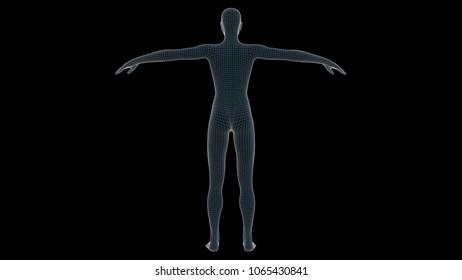 3d illustration of a woman xray hologram