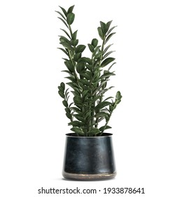 3D illustration of Zamioculcas in a black pot isolated on white background