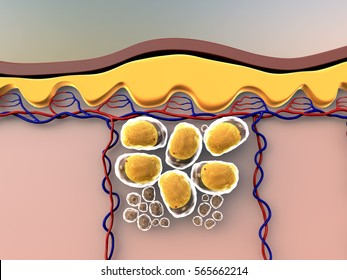 3D illustrations of fat cells, subcutaneous fat, illustration of human leather anatomy, fat cells and vein, fat cells under skin