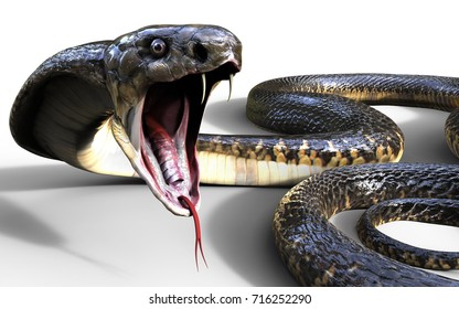 3d King Cobra The World's Longest Venomous Snake Isolated on White Background, King Cobra Snake, 3d Illustration, 3d Rendering