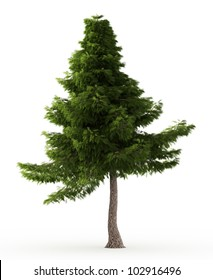 3d Lebanon cedar tree isolated over white