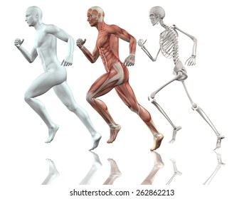 3D male figure running with skin, skeleton and muscle map