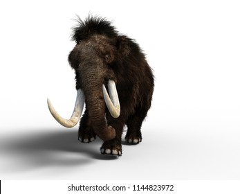 3D Mammoth Isolated