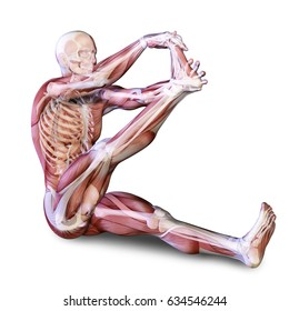 3d medical illustration showing leg flexion