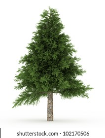 3d Pine  tree isolated over white