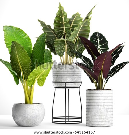 Royalty Free Stock Illustration of 3 D Plant Renders Pots On White
