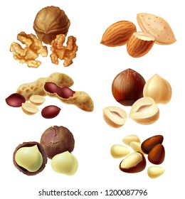 3d realistic set of various nuts, hazelnut, macadamia, peanut, almond, walnut, pine nuts, whole kernels and halves, cracked and peeled. Healthy organic diet product for vegans, vegetarians