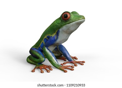 3d render of an Amazon red eyed tree frog sitting, isolated against a white background.