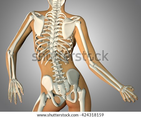 3 D Render Back Woman Body Skeleton Stock Illustration 424318159 ...