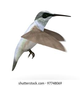 3d render of colibri bird