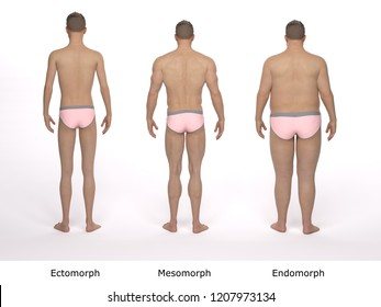 3D Render : The comparison of 3 male body type including ectomorph (skinny), mesomorph (muscular) and endomorph (overweight)
