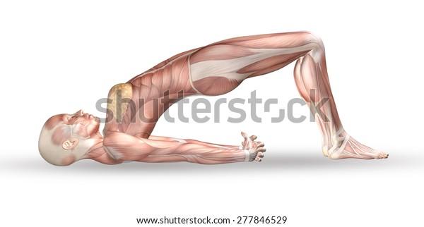 3d Render Medical Figure Muscle Stock Illustration 277846529 on yoga energy, yoga international, yoga back, yoga stretches, yoga adrenal glands, yoga leg workout, yoga history, yoga skin, yoga peace, yoga anatomy, yoga strength, yoga mind, yoga bones,