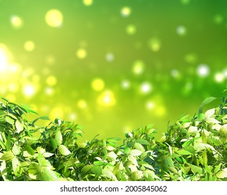 3D render of green leaves on a sunny bokeh lights background