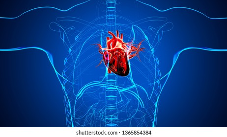 3d render of human heart intersection
