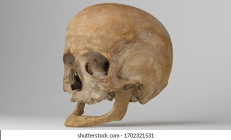 3d render of Human skull isolated on grey, realistic Skull bone, 3d rendering