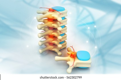 3d render of human spine  on medical background
