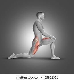 3D render of a male figure in kneeling iliopsoas stretch highlighting muscles used