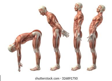 3D render of a medical figure showing trunk flexion, extension and hyerextension