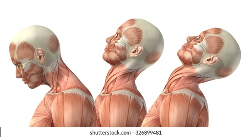 3D render of a medical figure showing cervical flexion, extension and hyperextension