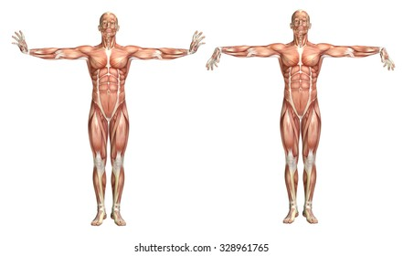 3D render of a medical figure showing wrist extension and flexion