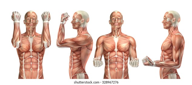 3D render of a medical figure showing elbow flexion and extension