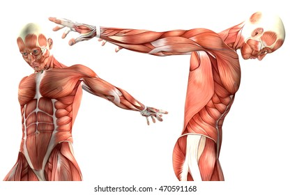 3d render of a medical figure showing arms flexion