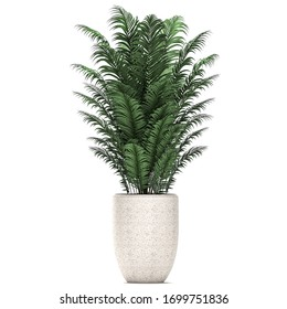 3D render of a palm trees in a basket isolated on white background