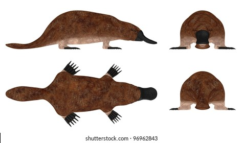 3d render of platypus animal