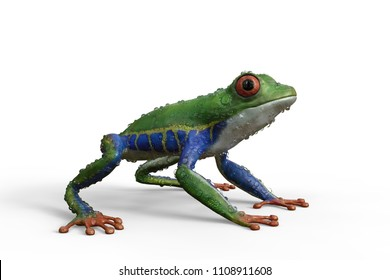 3d render of a Red-eyed Tree frog, with water droplets on its body.