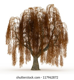 3d render Weeping willow in autumn with yellow leaves isolated over white