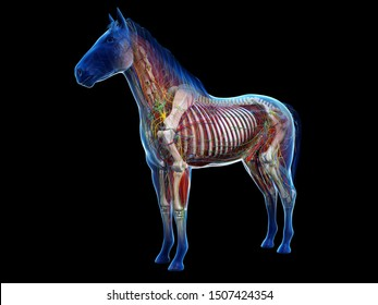 3d rendered anatomy of the equine anatomy