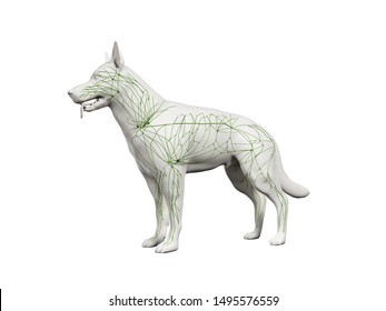 3d rendered anatomy illustration of the canine lymphatic system