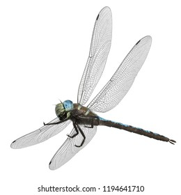 3D Rendered Dragonfly Paddle-tailed Darner