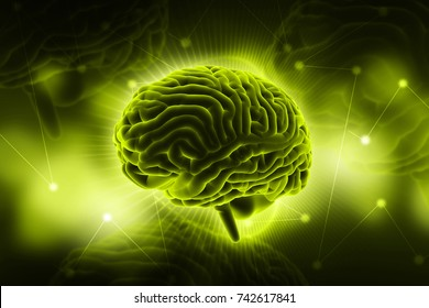 3d rendered  human brain in colour background