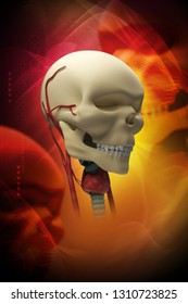 3d rendered Human skull on isolated color background