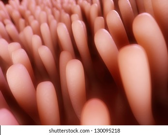 3d rendered illustration of colon villi