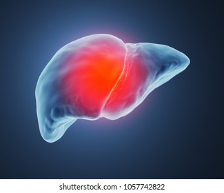 3d rendered illustration of a computer diagnosis of the liver.