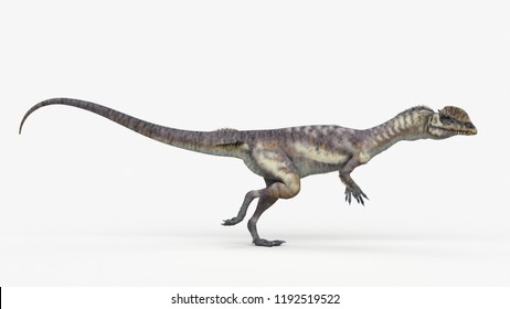3d rendered illustration of a dilophosaurus
