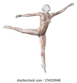 3d rendered illustration - female ballet dancer