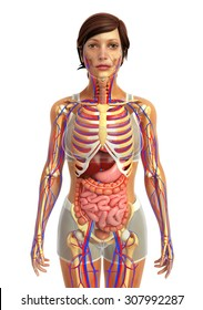 Human digestive system images stock photos vectors shutterstock 3d rendered illustration of female digestive system ccuart Image collections