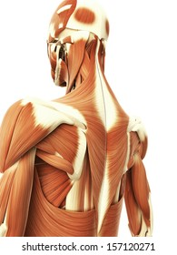 3d rendered illustration of the female neck muscles