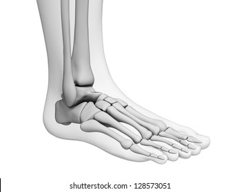 3d rendered illustration - foot anatomy