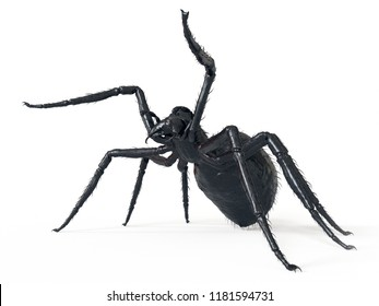 3d rendered illustration of a giant spider