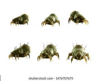 3d rendered illustration of a house dust mite on white background