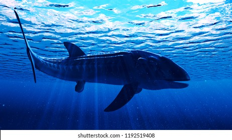 Leedsichthys High Res Stock Images Shutterstock