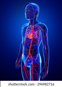 3d rendered illustration of male arterial system